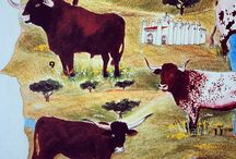 Cattle | Gado Bovino