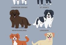 The Dog Picture & Poster
