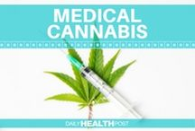 Medical Cannabis / Learn more about medical marijuana and the health benefits of and CBD oil.