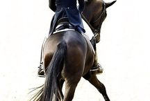 Dressage of course