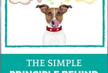 How To Choose A Commercial Dog Food / The commercial dog food market is a minefield...a jungle...You'll find a number of tips here to help you choose the best food for your dog