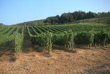 Tenuta Vitanza / Azienda Agricola che produce vini pregiati