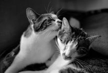 Two Stupid Cats Blog