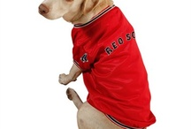 Team Pet Products / Get your pooch prepped for gameday with these awesome Pet Products for NFL, MLB, NCAA, NHL and NBA teams. Any doggie looks adorable in Pet Jerseys and Hats! / by Sports Style