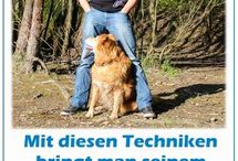 Training mit hund