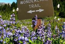 Hiking the Wonderland Trail / Articles and maps of the world famous Mount Rainier hike.
