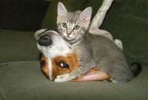 animal fotos / animals