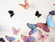 borboletas / by rogeria kinui
