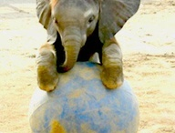 elephants for laura-lee