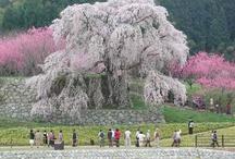 Japan's scenery / by Ritsuko