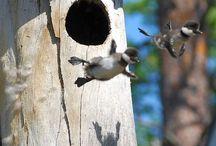 Bird babys