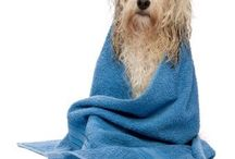 Dog and Cat Grooming Tips / Grooming advice for dog and cat owners.