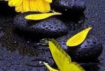 λουλουδια gif