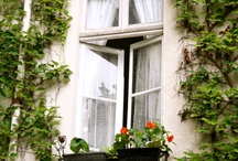 Windows and life