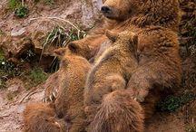 Bears real ones
