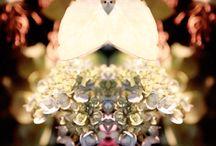 #seresocultos / Fotografias de plantas, flores, árvores e folhas. Contrastando ideias sobrepostas para uma imagética questionadora.  Extrair de cada olhar uma nova interpretação.  Seres ocultos é uma série fotográfica criada desde de 2012 pela fotógrafa Márcia Formigoni. Cerca de 90 fotografias já realizadas, faz parte de seu acervo pessoal.
