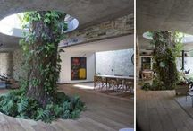 Vegetación interior