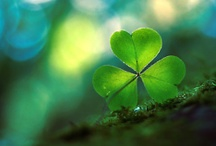 luck o the irish / by Annie Brewerton