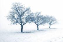 ( let it ) Snow