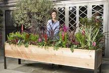 veg garden design