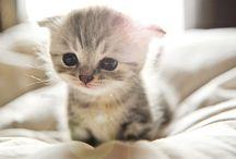 Cute Cutie Cuteness / When I need a jolt of cute