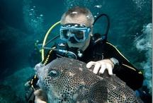 Blogs! / We have a diving blog and we love it / Tenemos un blog de buceo y nos encanta / by fordivers