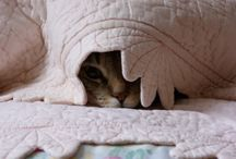 Cats / by Leslie Specht
