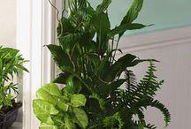Pokojové rostliny - kombinace