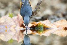 Nature! / by Char Jones Mabbott