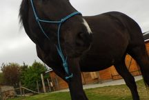 Horses - Natural Horsemanship / I try to learn the natural horsemanship, and i think we can do anything with the horses, without that we hurt!