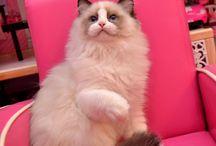 Sabina <3 / The cat of my life <3