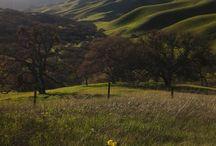Livermore Hills