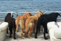 Pontooning with Pets / Pets love the water too :) / by Godfrey Pontoons