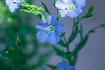 blue&purple flowers