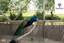 Bird Club @Natura Parc / www.naturaparc.ro