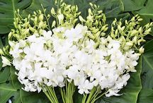 Orchids for decoration, wedding ideas