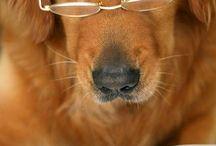 pes v brýlích