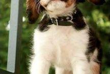 Hunde :-)