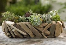 Drift Wood and other naturey things / by Aurora Castellanos