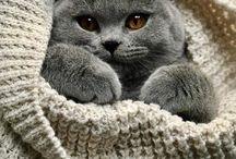 Kitty kitty ❤️
