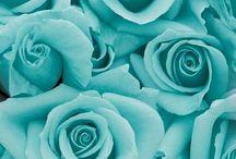 Turquoise / Barvy