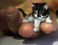De kleinste dieren ter wereld
