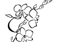 tatus orquídea