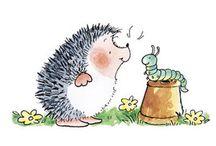 Hedgehog cute pictures ❤