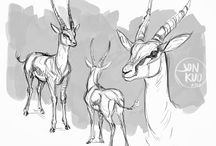 Drawing Animals and Creatures