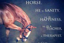 Paarden teksten