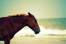 beach bum chix blog