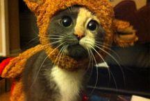 kitty funnies