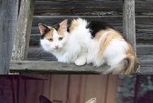 кошки симпатяги