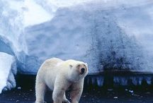Explorer Voyages / Find your dream voyage to Greenland, Iceland, Antarctica and more